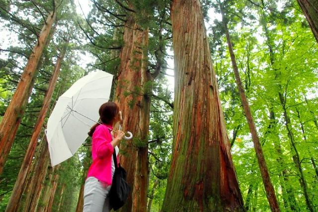 戸隠神社五社巡りツアーの画像