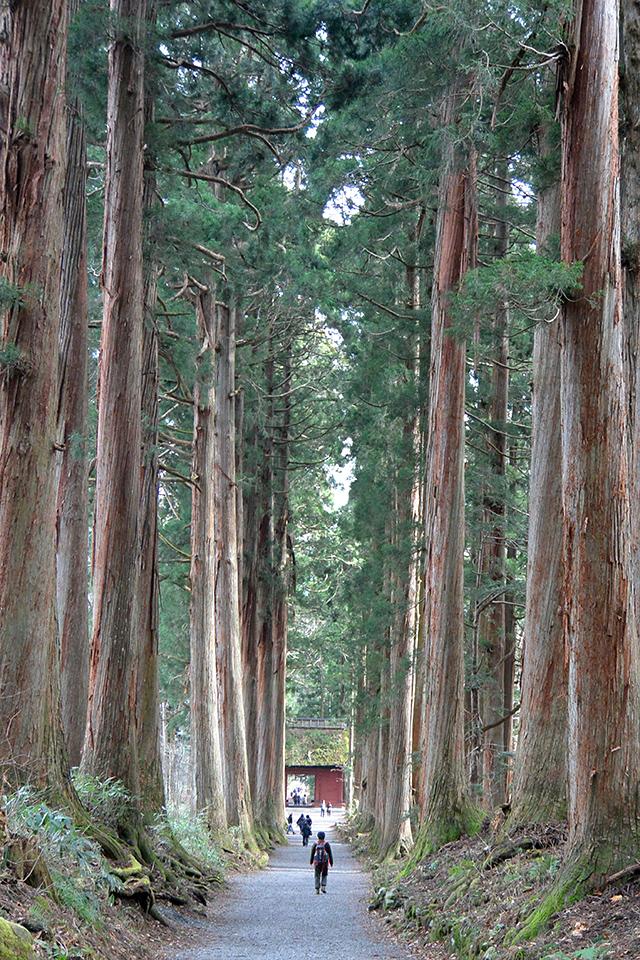 戸隠神社ツアーの画像