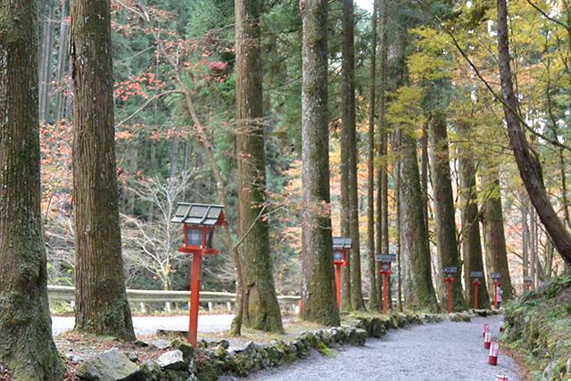 奥宮参道の杉並木