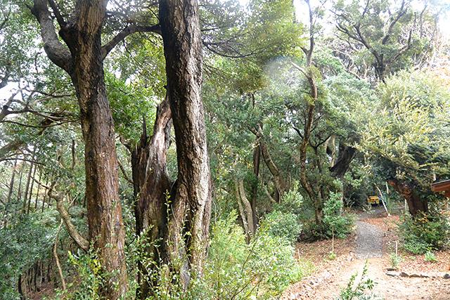 神明神社の裏の森