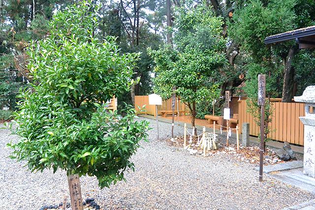 境内に植えられた木