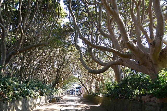 酒列(さかつら)磯前神社」の300mほどの参道