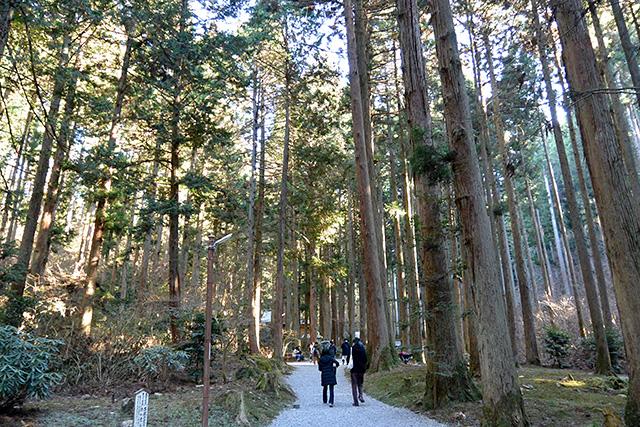 御岩神社・杉並木