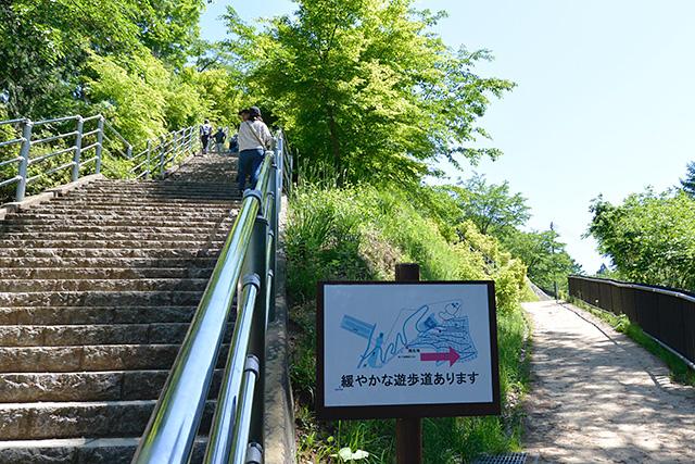 咲くや姫階段と遊歩道