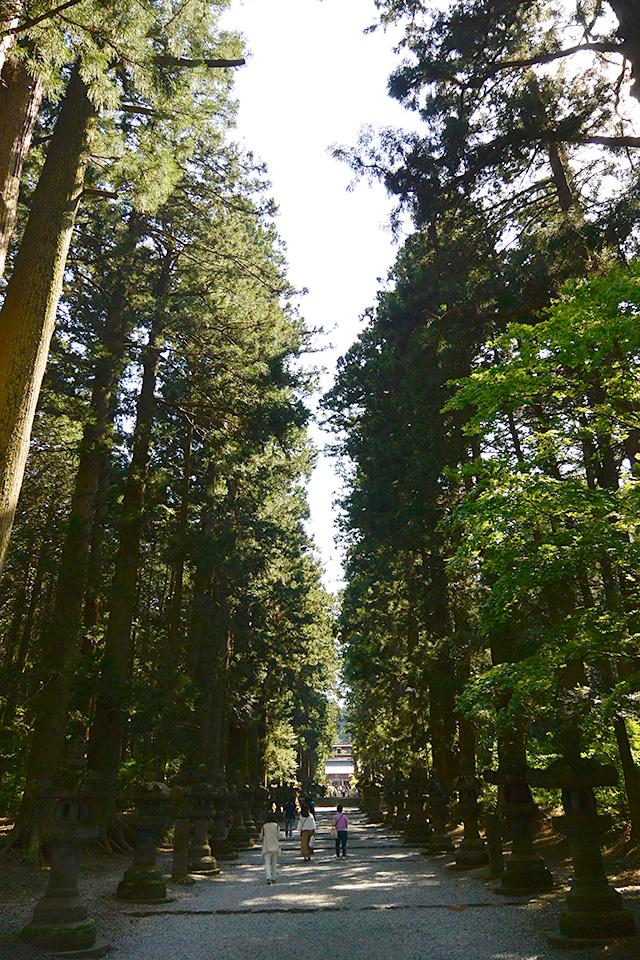 北口本宮冨士浅間神社の杉並木の参道