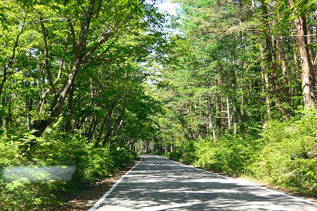 奥宮への新緑の山道