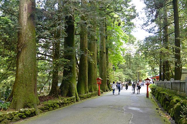 箱根神社の参道の杉並木