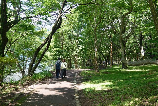 九頭龍神社への樹林の小径