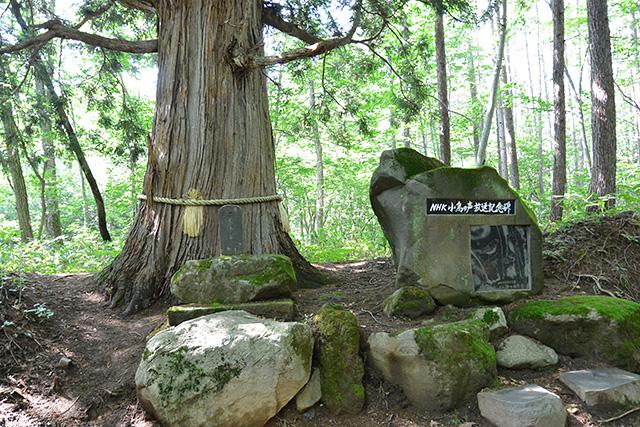 伏拝所の石碑&ご神木とNHK小鳥の声放送記念碑