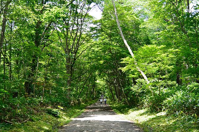 奥社の緑あふれる参道