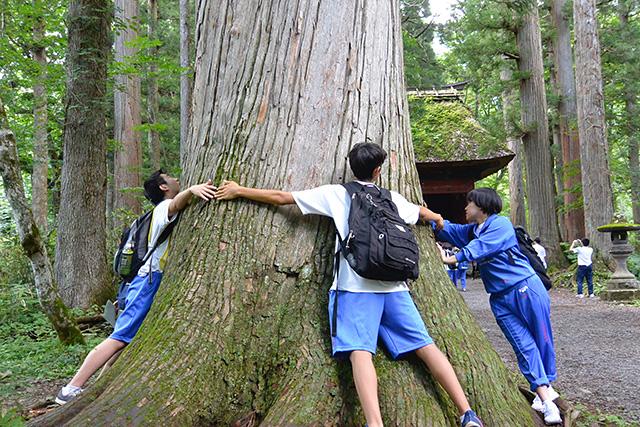 ご神木ともいえる木の太さを測る修学旅行生