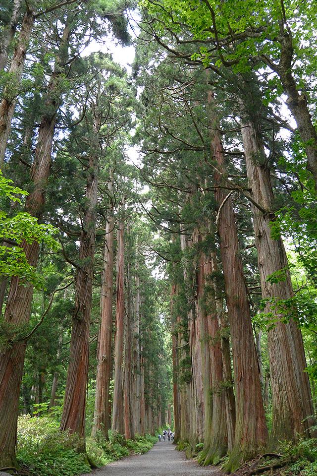 奥社の杉並木
