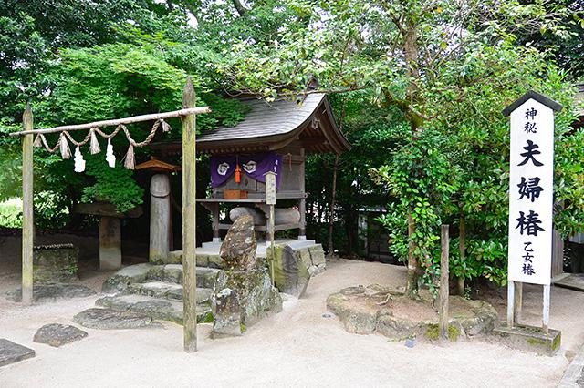 大神神社と第二の夫婦椿(乙女椿)
