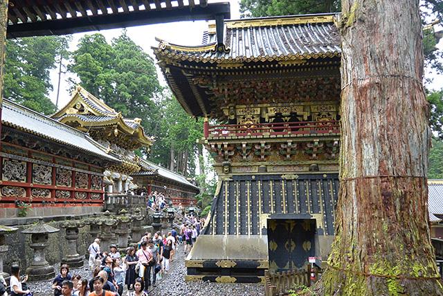 薬師寺の前の鼓楼とご神木