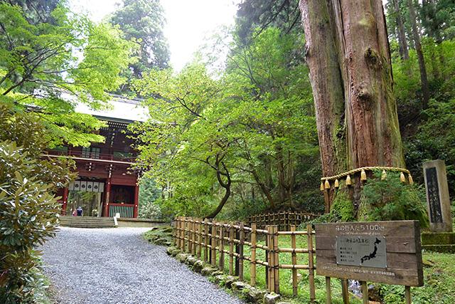 御岩神社・三本杉と楼門