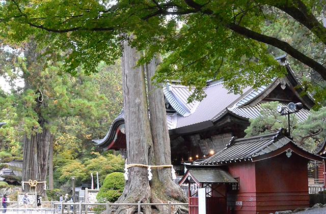 北口本宮冨士浅間神社の夫婦桧と太郎杉