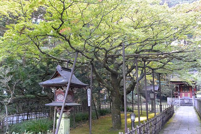 北口本宮冨士浅間神社の七色もみじ