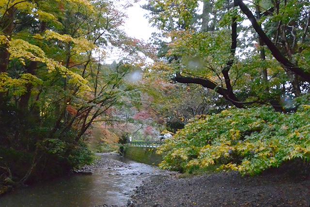 小國神社・宮川沿いの紅葉