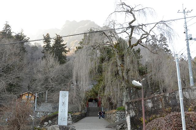 妙義神社・しだれ桜