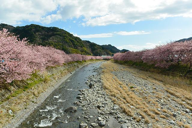 河津桜・峰小橋からの景観