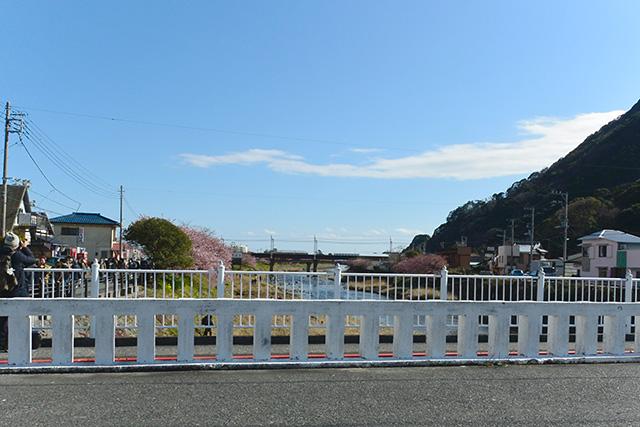 河津ざくら・荒倉橋