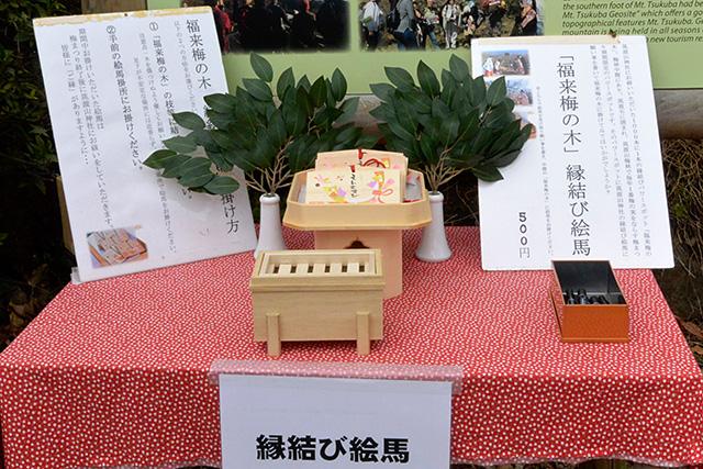 筑波山梅林・福来梅の木