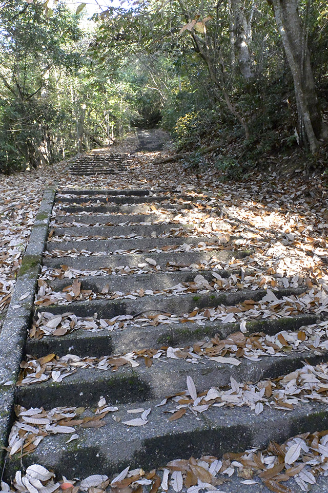 傘松公園への登り道