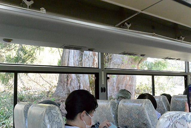 立山高原バス/車窓・立山杉