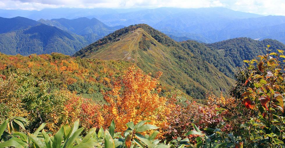 谷川岳ハイキングツアーの画像