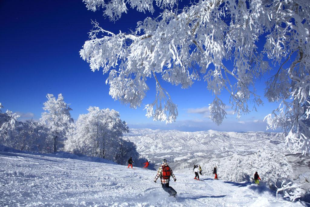 野沢温泉スキー場のイメージ1